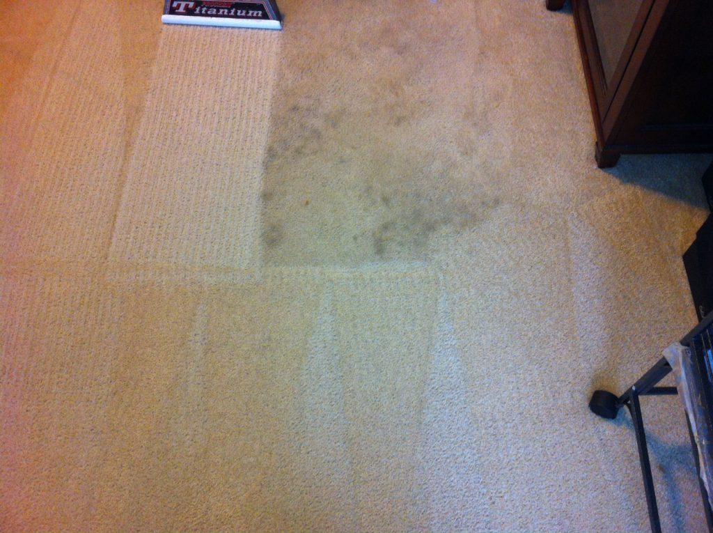 carpet-74