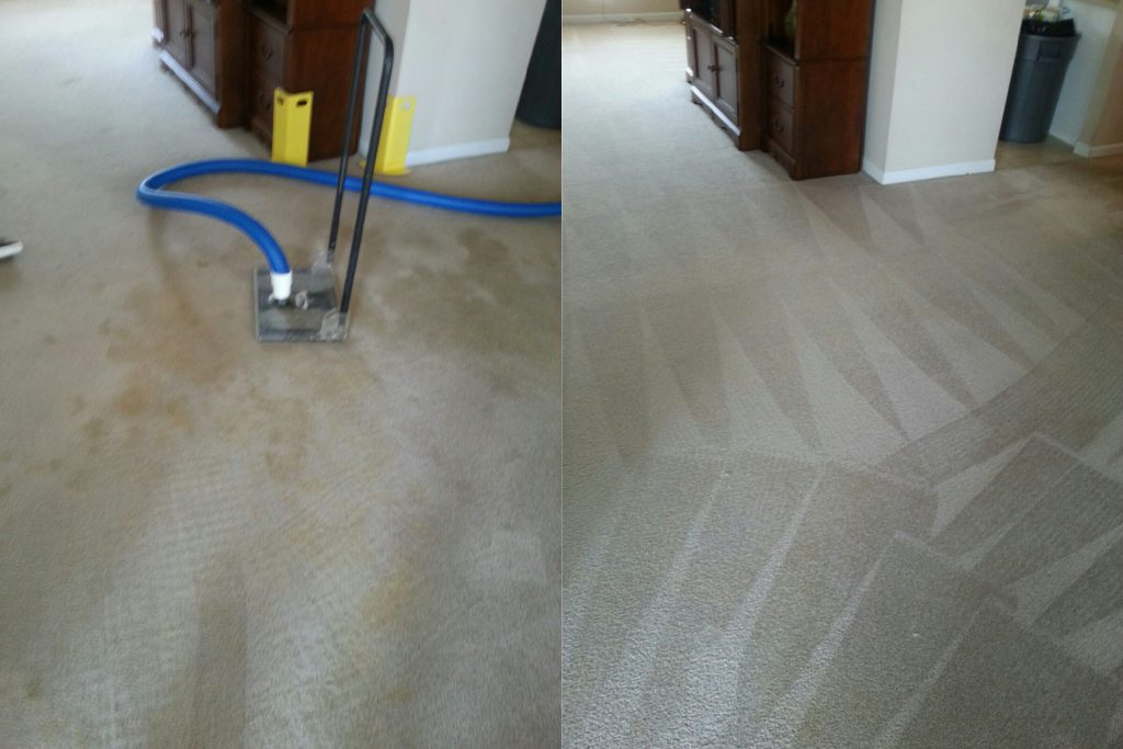 pet-odor-and-stain-removal