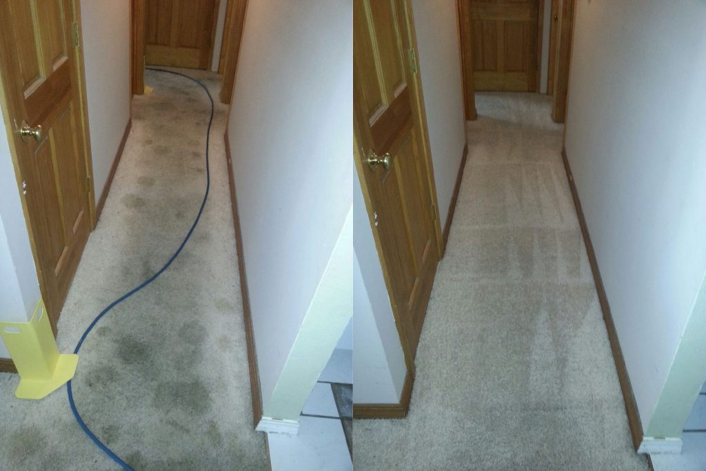 st.-louis-carpet-cleaning-picture