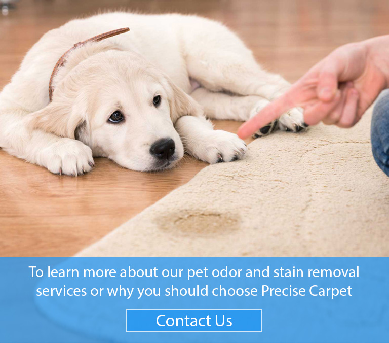 Pet Odor Stain Removal St Louis Mo Precise Carpet Cleaning