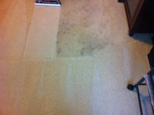Carpet Cleaning Ballwin