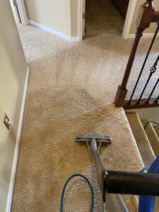 Carpet Cleaning St. Louis