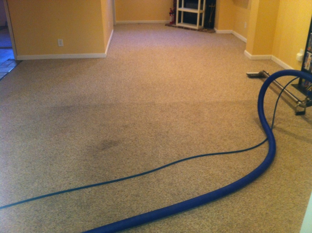 The best way to clean your carpet for spring